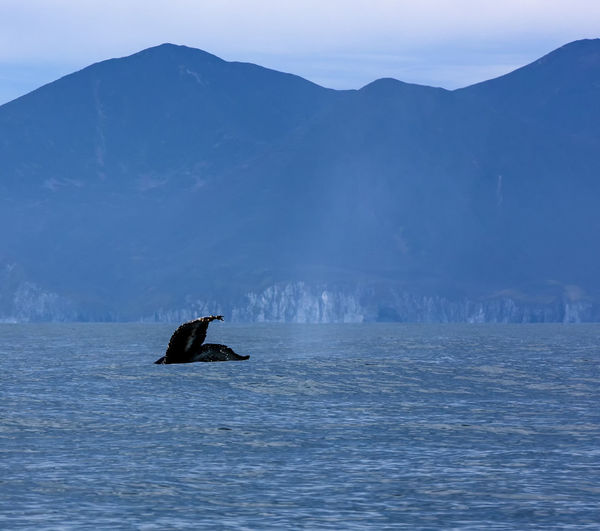 The beautiful seascape with whale tail. select focus