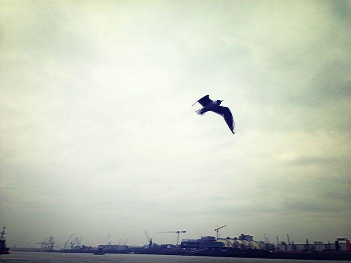 Sky Seagull EyeEm Nature Lover