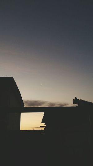 Catmoon Cat Moon Lune Sunset