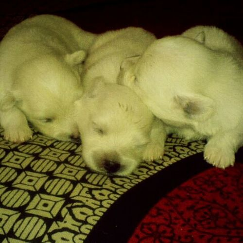 How is my pets..
