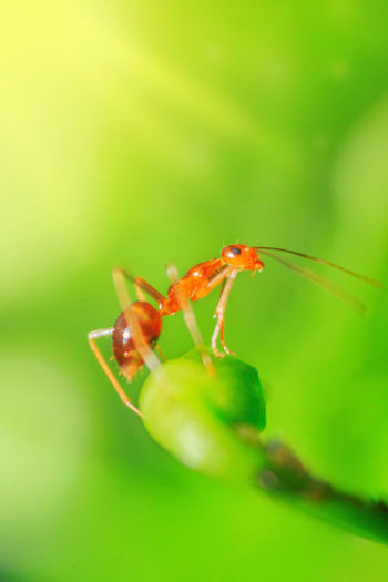 Close-up of ant on flower