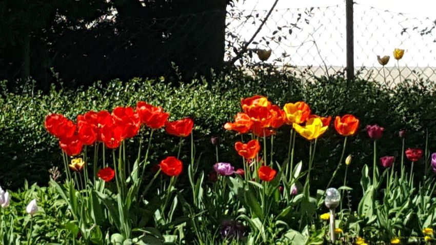 Enjoying Life Flowers