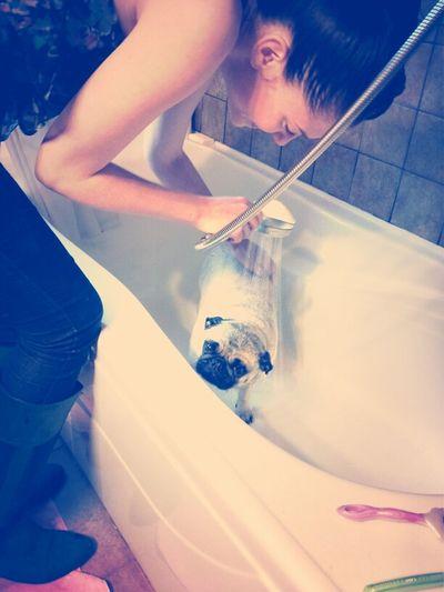 Pug  Pug Wash  Bath Time