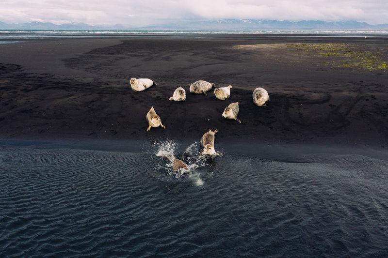 High angle view of seals at beach
