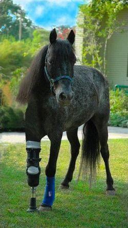 this is molly a survivor of hurricane katrina