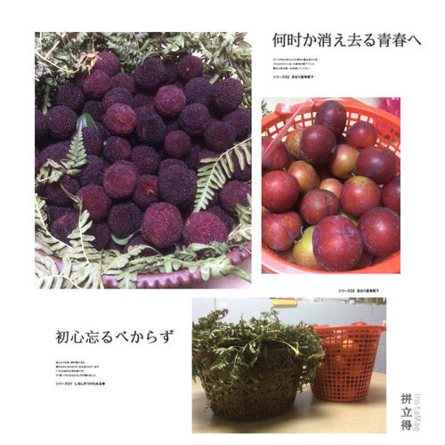 ❤️ 杨梅 醉李 Sweet Fruit Waxberry Yummy Fresh Eat More Fruit Today's Hot Look Fruits