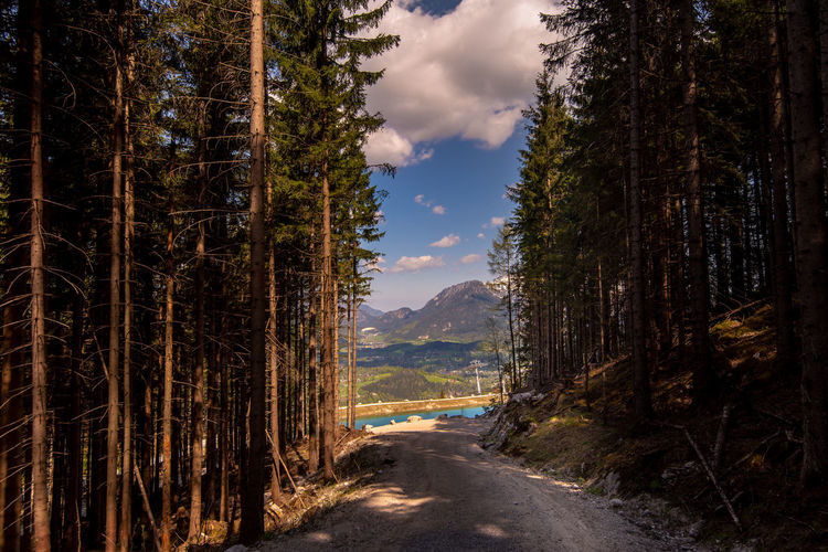 Alpen, Germany Travel Story Europe Königssee Bayern Germany Schönau Am Königsee Traveling Stay Out Tree Pinaceae Pine Tree Sky Cloud - Sky Pine Woodland Tree Area Scenics Tranquil Scene Countryside Calm Idyllic Woods Coniferous Tree Rocky Mountains Horizon Over Water