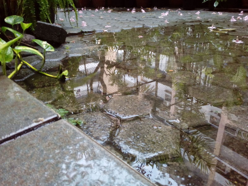 Water Reflection Nature Outdoors No People Day Beauty In Nature Brick Pavers High Angle View Puddle Tree