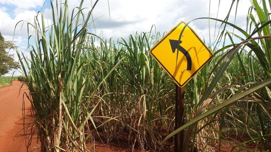 #nopeople #sky #sugar_cane #plate #way