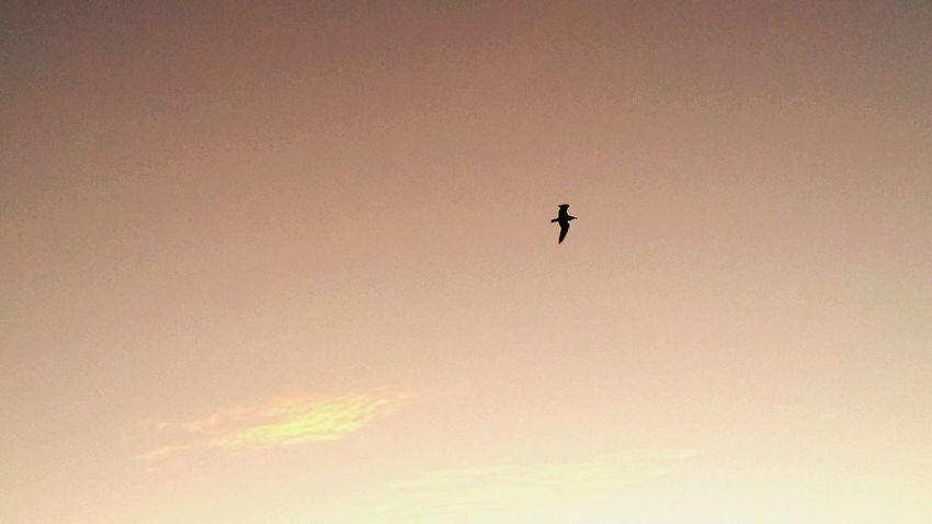 Sunrise_sunsets_aroundworld Good Morning Sunrise Birds In Flight