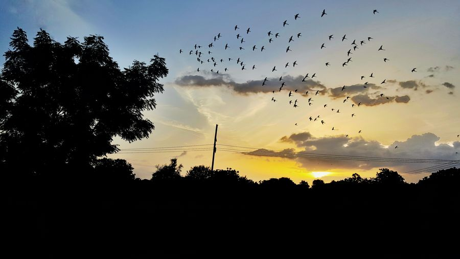 India Incredible India Bagalkot Karnataka Bird Tree Flying Sunset Silhouette Flock Of Birds Sky Animal Themes Scenics Tranquility Calm Countryside Non-urban Scene Dramatic Sky