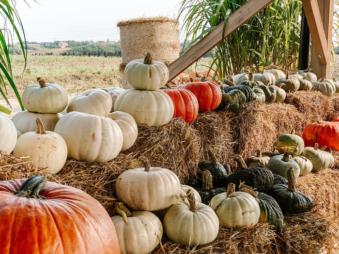 Various pumpkins for sale at market stall