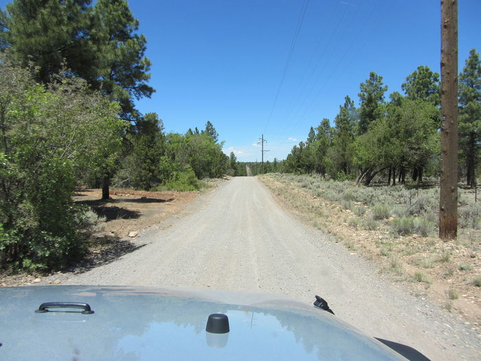 USA Outdoor Blue Sky Summer Bushes And Trees Trees Dirt Sand Meadow Grass Grand Canyon Arizona Sunny Nofilter Dessert Rally Rallye Jeep Jeep Wrangler  Jeep Tours Car Adventure