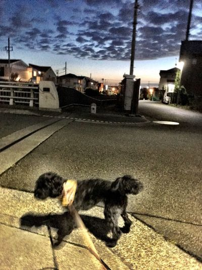 夜明け Sunrise Dog