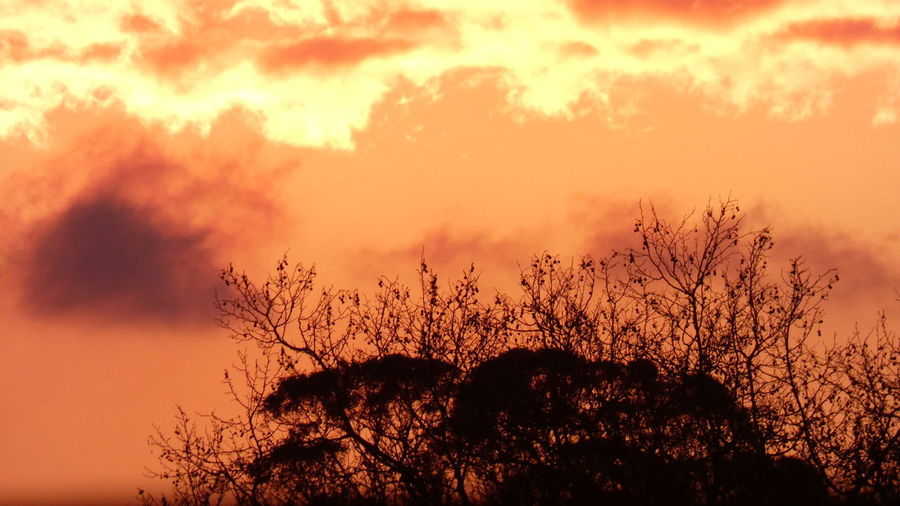 Low angle view of silhouette plants against orange sky