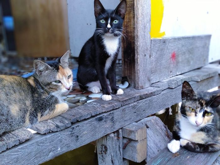 Portrait of cats sitting on wood