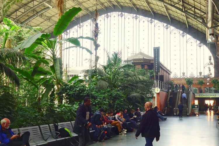 Madrid Madrid Spain SPAIN Tourist Attraction  Tourist Destination Travel Atocha Atocha Renfe Renfe Train Train Station Indoors  Interior Design Interior Transportation Group Of People Architecture Built Structure Building Exterior Modern City Tropical Tree Palm Trees Public Places Waiting Hall It's About The Journey