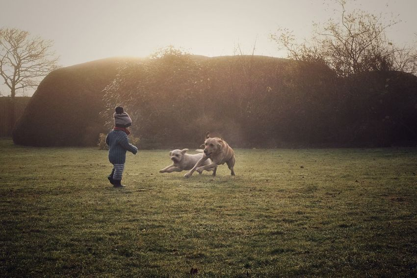 Running with the pack. Shedfield, Hampshire. Magic Light Beauty Dreamlike Dog Grass Field Mammal Real People One Animal Pets Nature Tree Full Length Outdoors Childhood Sunset Day One Person Boys Bonding Men Sky