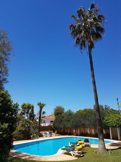 Swimming Pool Palm Tree Summer Vacations No People Beauty In Nature Clear Sky Nature Sky Portugal Lagos Canoma Photography Nikon Nikon D7200 Sigma