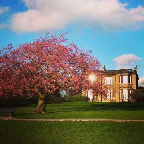 Awesome weekend back home for my birthday. Miss this place. Nottingham Woodthorpe Park Blossom tree spring instadaily instance home