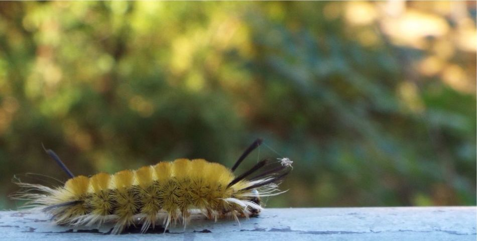 -??Movin' Right Along??- The Muppets Caterpillar The Purist (no Edit, No Filter) Macro