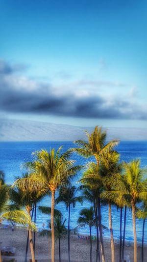 Palm trees in Hawaii. Nature Outdoors Waterfront Scenics