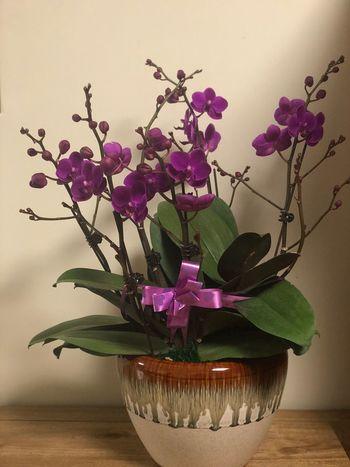Flower Purple No People Fragility Vase Nature Indoors