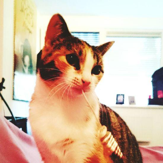 Cats Catoftheday Sweetcat Eyeemcats Catworld Worldofcat Magiccat Playtime Sweetme Catmoment #catmagic