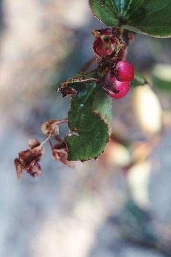 Flower Beauty In Nature Nature Flektogon Autumn Flowers