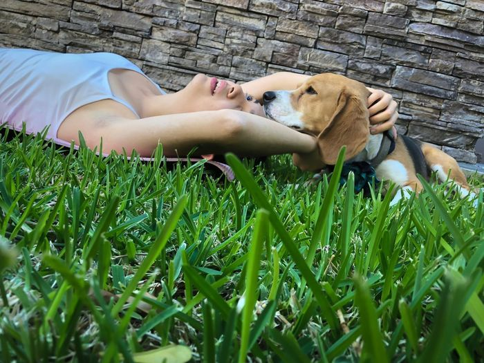 Young woman with a dog Beagle Domestic Plant Mammal Pets Dog Canine Domestic Animals One Animal Green Color Animal Lying Down Animal Themes Field Grass Relaxation Vertebrate Land One Person Day Real People