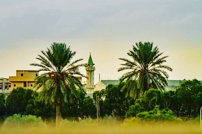 Palm Tree Tree Sky Green Color Architecture Outdoors No People Place Of Worship Day Misrata Libya Cultures Cityscape