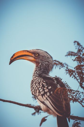 Side view of hornbill perching on branch against sky