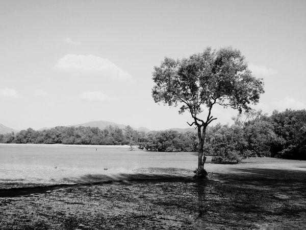 Mangrove Beautiful Nature Silence Calm Blackandwhite