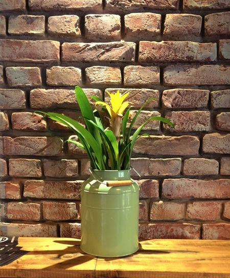 Decoration Flowers Brick Wall Milk Can Stone Plants Still Life 19 366 Light And Shadow Light