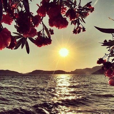 (لا إله إلا أنت سبحانك إني كنت من الظالمين) سورة الأنبياء منظر لقطة خضار طبيعة منظر_جميل جميل رائع خيالي نهر بحر وادي صحراء اشجار شجر طبيعي شاطئ ساحل وردة هاشتاقات_انستقرام_العربية ورود زهور زهرة عشب شلال شلالات غيم مطر أمطار سحاب