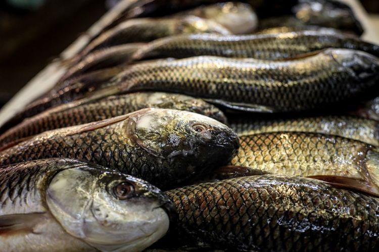 Fresh fish at