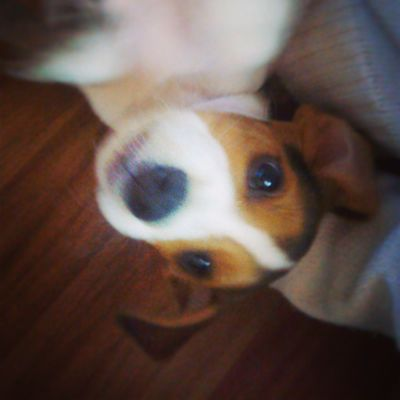 Bom dia. Darwin Beagle Instapet My_dog_beagle mysnoopy