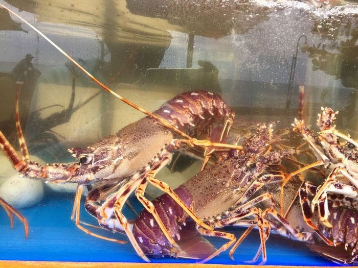Delicious Spiny Lobster Seafoods Water Food
