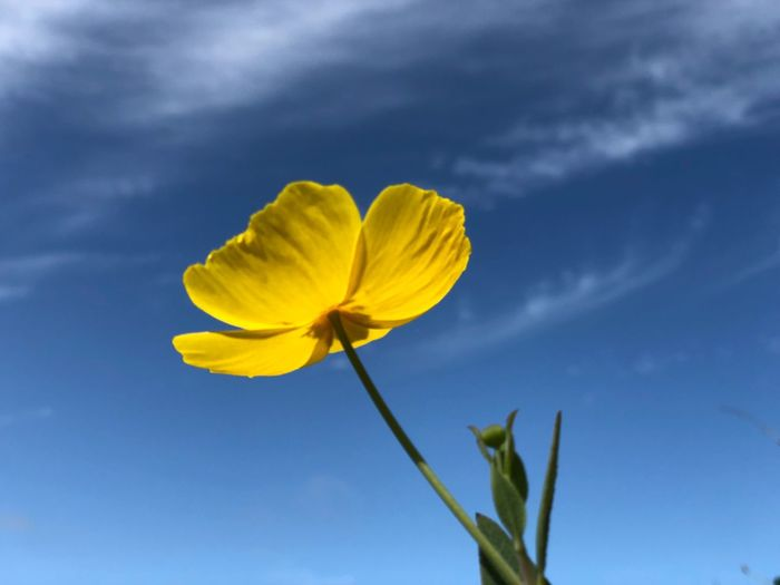 Yellow & Blue EyeEm Selects Beauty In Nature Flowering Plant Flower Fragility Plant Vulnerability  Sky Yellow Freshness Growth Low Angle View Nature Petal Blue