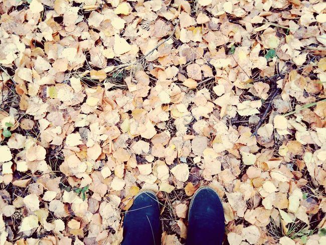 Поход путешествия ног✌ Екатеринбург Осень 🍁🍂 осень прекрасна 🌾🍂🍃 листья желтые листва Leaf Fall