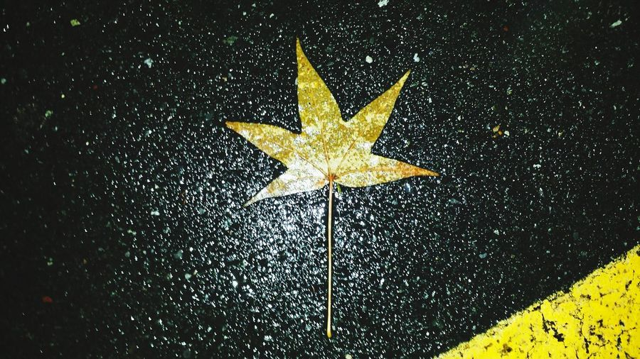 Leaf Relaxing Taking Photos Check This Out Outdoors Yellow Black Yellow And Black Parking Lot Walmart First Picture Of December December