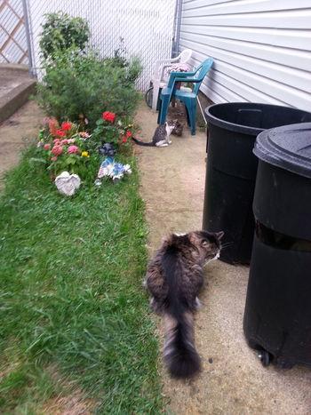Kitties. And Elvis ♡♥