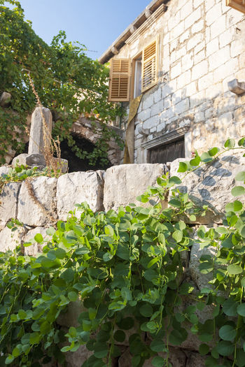 Plants growing by wall against building
