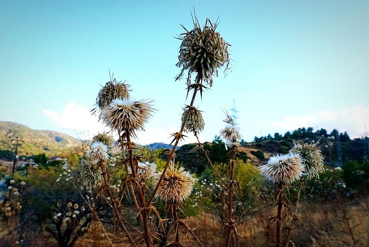 At the village... Check This Out Dry Flower
