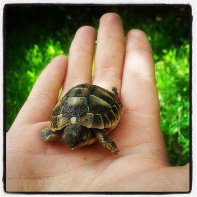 Benvenuta piccola!!!! Cute Pets In My Garden Life Tartaruga