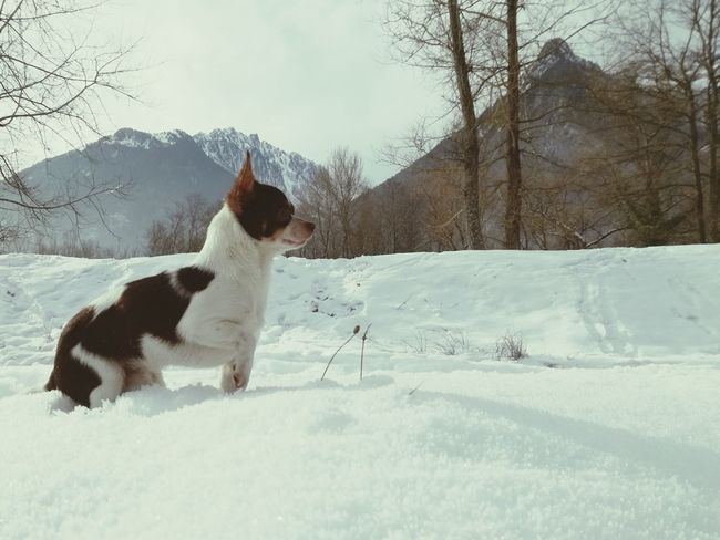 Pets Dog Winter Snow Cold Temperature Animal Themes Tree Domestic Animals Playing One Animal Full Length Mammal No People Day Nature Outdoors Little Dog Little Pet Savoie Maurienne Winter Cold