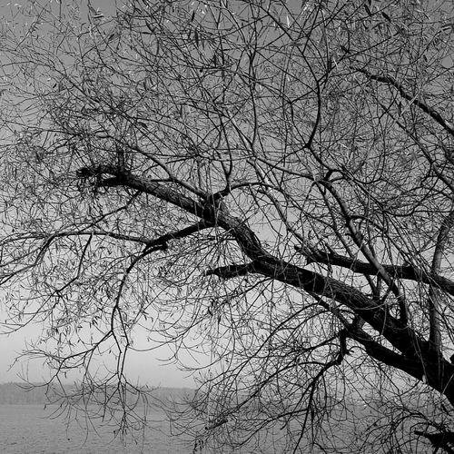 Hanging Out Nature Blackandwhite Trees Bws_worldwide Eye4photography  Ee_daily Greenthumb