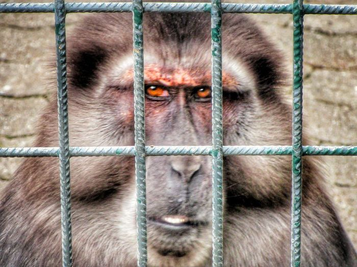 Portrait of monkey in cage