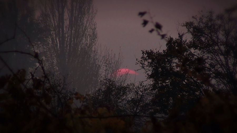 Sunfog Beauty In Nature Day Evening Foggy Weather Growth Low Angle View Nature No People Outdoors Scenics Sky Sunset Sunset Fog Tranquility Tree Winter Sunset