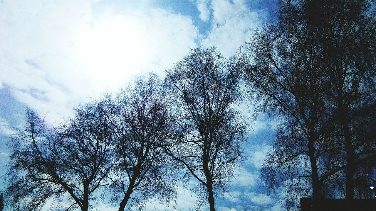 low angle view, tree, bare tree, sky, branch, nature, beauty in nature, day, tranquility, cloud - sky, outdoors, no people, scenics, tranquil scene, blue